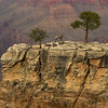 Grand Canyon residents.